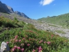 die letzen Alpenrosen; Bütschiflue 2620m, Aeugi 2435m, Bummerengrat, hi  Regenboldshorn 2193m, Hüendersädel
