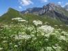 Regenboldhorn 2193m, Rotstock ,Aeugi, Ammertenspitz 2613m, Grossstrubel 3243m