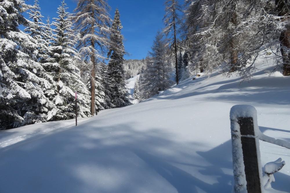tief verschneiter Bergwald