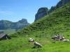 Schafweide  auf dem Bärstein; Kamor und Hoher Kasten