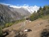wieder eine Weide; Strahlhorn 3027m, Strahlgrat, vo Stock 2525m, Kl. Wannenhorn 3707m