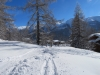 auf dem Schneeschuhtrail durch den lichten Winterwald