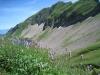 Sicht auf Arnihaggeen 2219m; Wiesen Knöterich, Pylygonum bistorta, Knöterichegewächse, Polygonaceae