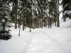 prächtiger Winterwald
