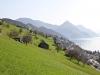 Blick auf Rigi Dossen, Vitznauerstock