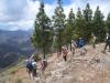 Abstieg durch den Kiefernwald