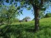 auf der Weide