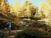 Bruni im Herbstwald