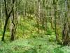 bemoostr Märchenwald