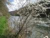 Frühling am am Doubs