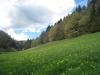 Frühlingswiesen mit Primula veris