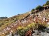 Herbst; Eggishorn