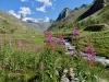 Täschalp 2172m, Mellichgletscher, Rimpfischhorn  4199m