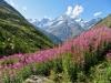 Täschalp 2172m; Schalihorn 3975m, Weisshorn 4505m, Bishorn 4153m, Brunegghorn 3853m