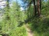 weiter unten im Bergwald