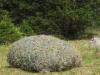 das Heu der Trockenwiesen ( Heumähder)