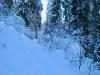 im tief verschneiten Bergwald
