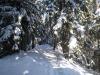 der Pfad durch den Wichulwald