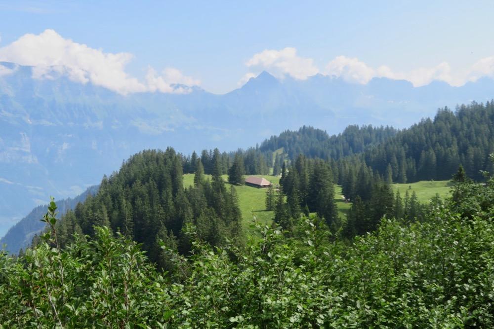 Sicht auf Winkelzahn; SIchelchamm, Gamsberg, Fuilfirst, Chrummenstein, Alvier, Gauschla
