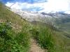 Bergblumen; Hohstock, dahinter Gross Fusshorn