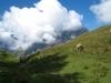 Schafweide mit Daubenhorn hinter den Wolken