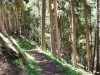ein schöner Weg im Bergwald