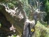 Wanderzeichen auf Baumstamm einmal etwas anders