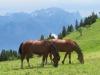 auf der Alp Folla ; Fyalknis und Gleckhorn