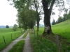 Allee auf  Alp  Pra Le Avau
