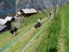 ungewohnte Tiere in Gasenried
