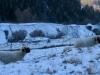 Schafe bei Gasenried