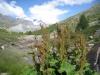 der Grünsee 2300m ;Rimpfischhorn 4199m, Strahlhorn 4190, Adlerhorn 3988m und Findelgletscher