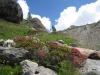 Bergidyll beim Hoferälpji 2280m
