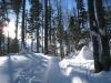 unterwegs im Winterwald zum Brünig