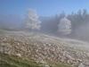 Rauhreif Landschaft oder Frühlingslandschaft?