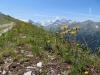 auf dem Höhenweg nach Zinal; Zinalrothorn 4221m, davor le Diablons 3609m, Matterhorn 4478m, Pointe de Zinal 3789m, Dent Blanche 4357m, Garde de Bordon 3310m, Corne de Sorbois 2896m