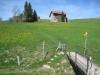 Alpenrose; Weg durch Wiesen