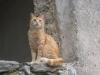 Katze in Hum