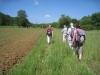 Wandern durch die Wiesen