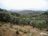 Terrassen mit Olivenbäumen