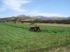 zur Abwechslun ein grünes Feld
