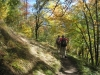 ein schöner Wanderweg im lichten Wald