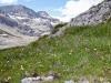 Schneehore 3179m, Chlis Schneehore 3146m, WIldstrubel 3244m, Wildstrubelgletscher
