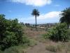 im Tal der tausend Palmen