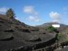 Weinanbau in Lanzarote
