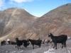 bei der Ziegenfarm