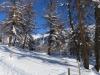 durch den lichten Winterwald nach Sporz