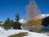 eine einzelne Lärche; Gürgaletsch 2441m, langer Grat,  Parpaner Schwarzhorn 2683m, Parpaner Weisshorn 2824m