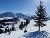 auf dem Bolberg;    Blick zurück auf Winterröscht und   Augstmatthoren; hi   Schreckhorn 4078m, Finsteraarhorn  4274m