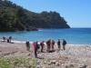 Hornmohn am Strand von Cala Tuent